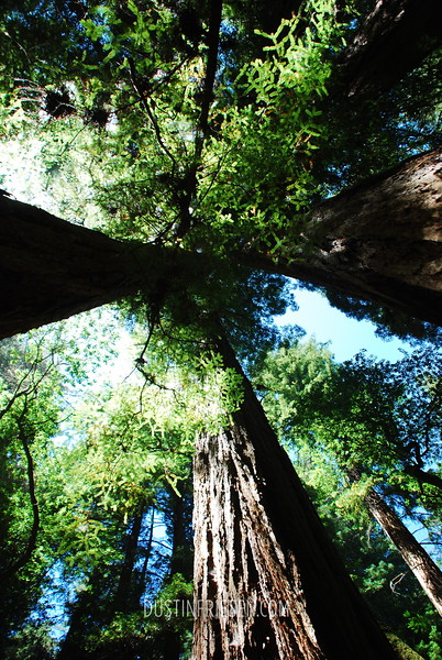 Muir Woods Nat'l Park, California