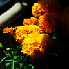 Marigolds in a VW