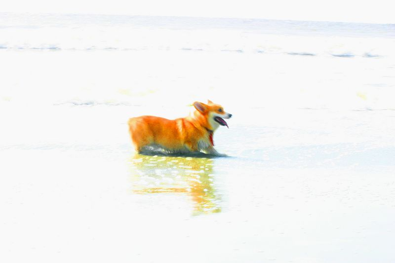 Skye is lyin' down in the surf