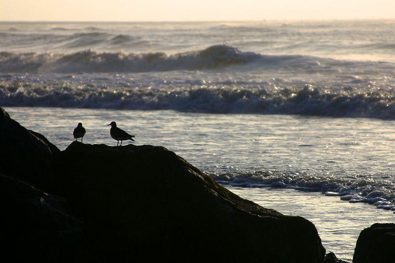 Birds, early mornin' risin' at the sea