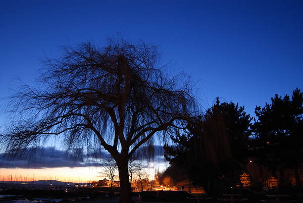 Willow At Sunset