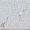 Sept 27<br /> A beautiful day at Jordan Lake<br /> Storks x2