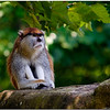 July 25<br /> Patas monkey in deep thought