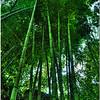 July 25 <br /> the tropics