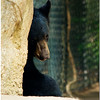 July 25<br /> Coy North American black bear