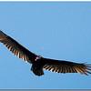 Sept 27<br /> A beautiful day at Jordan Lake<br /> <br /> Roadkill anyone?