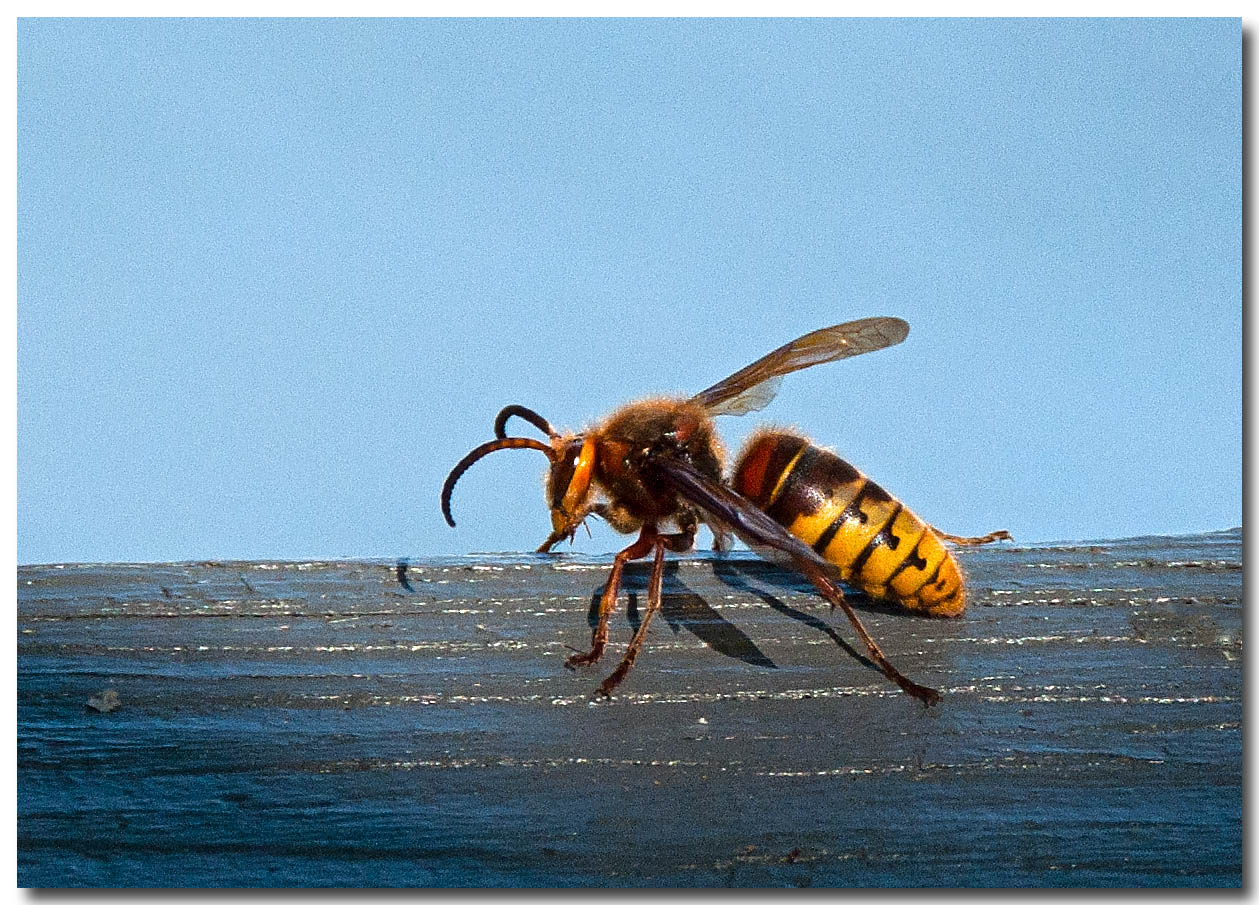 September 12<br /> Busy lil' bee