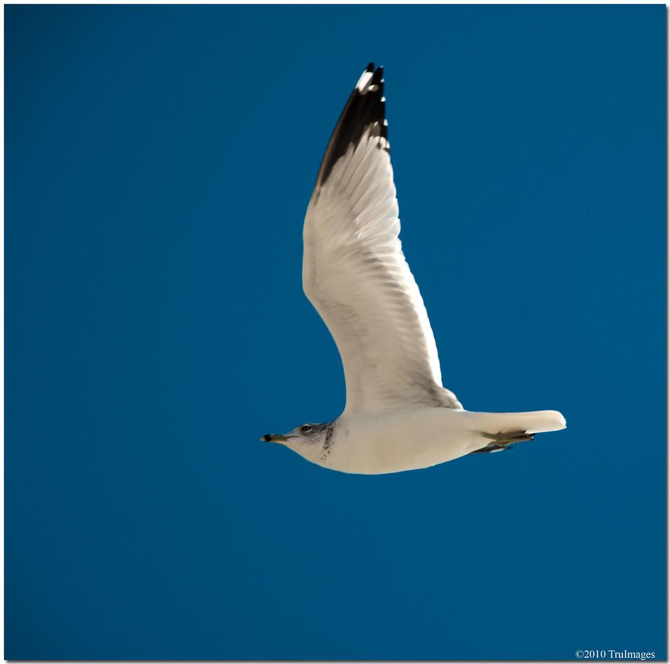 Nov 28<br /> Graceful glider