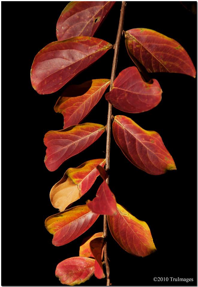 Nov 17<br /> Colors of fall