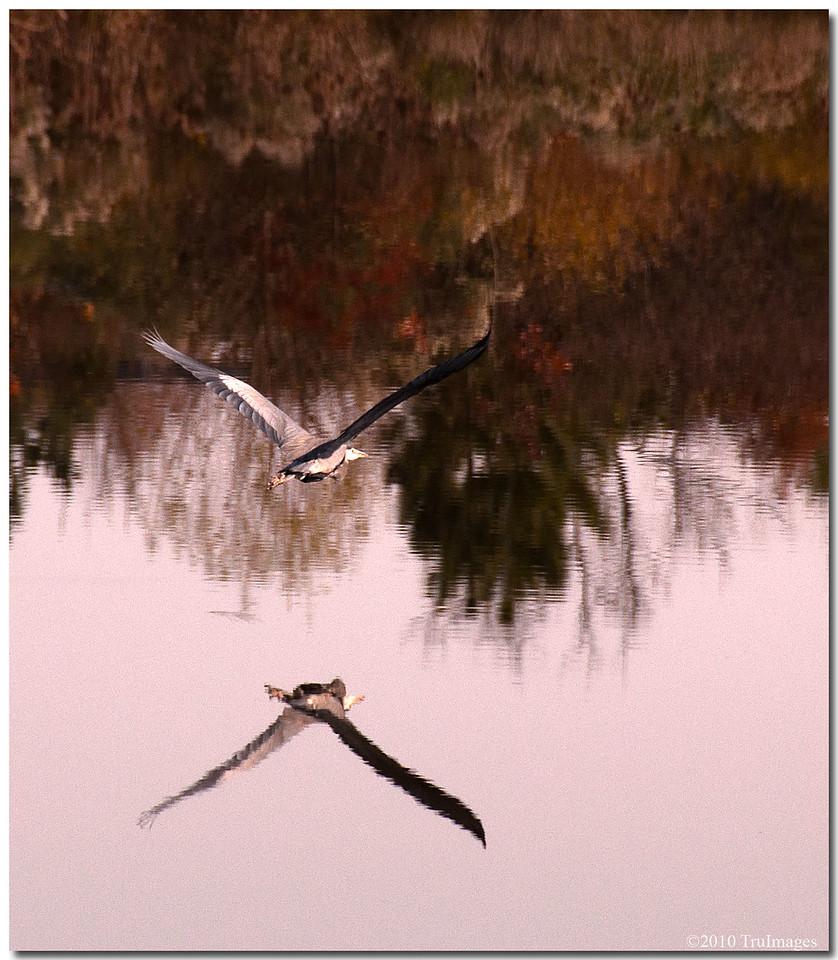 Nov 21<br /> Mirror image