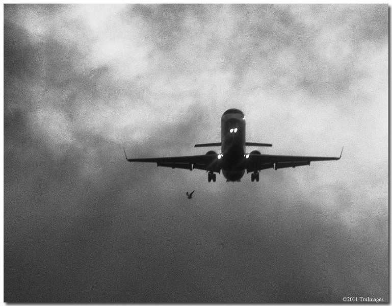 """Apr 16<br /> """"Hey plane, watch where you're going!"""""""