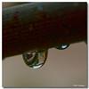 Jul 31<br /> Raindrop reflections