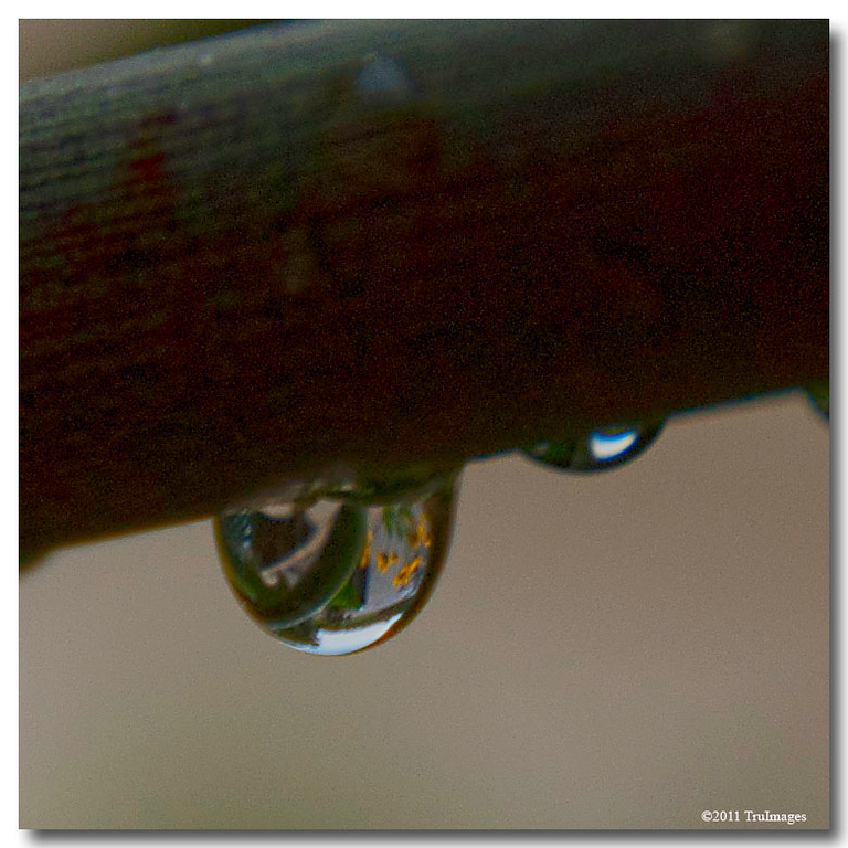 Jul 31<br /> Raindrop reflections