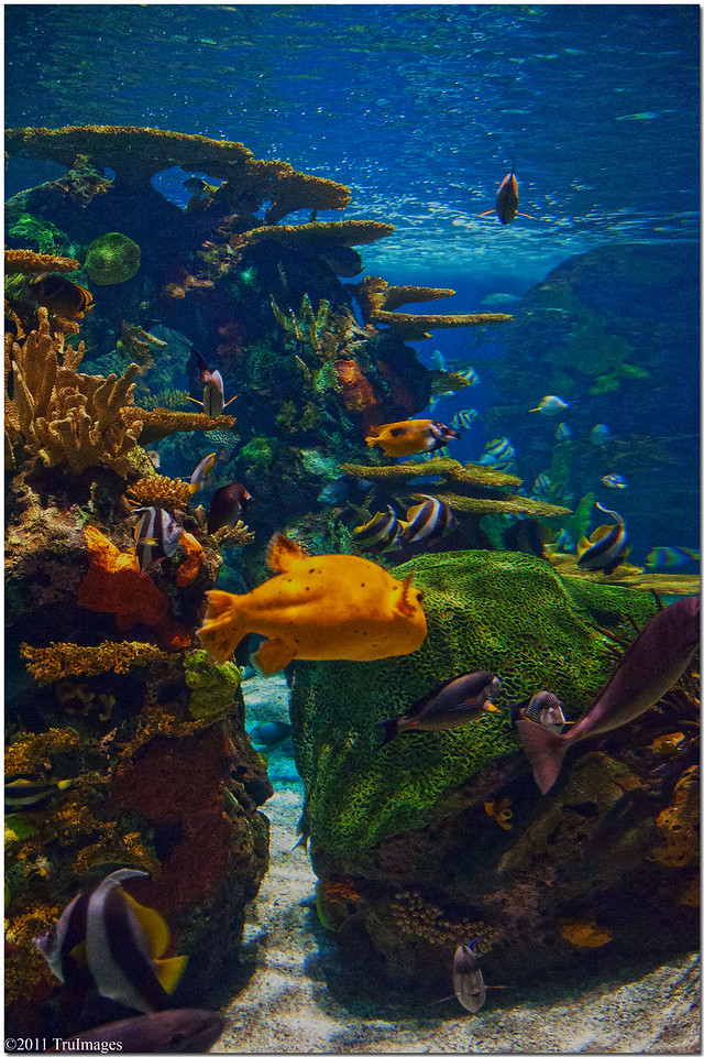 Jan 29<br /> Ripley's Aquarium, Myrtle Beach SC