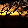 Nov 30<br /> The Serengeti...nah just North Carolina!