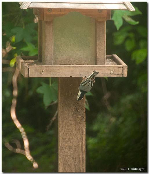 Aug 16<br /> Bird feeder high wire act!