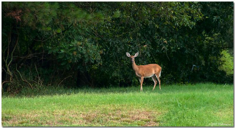 Jul 31<br /> Curious onlooker