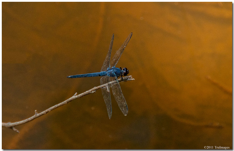Jul 9<br /> A colorful dragonfly
