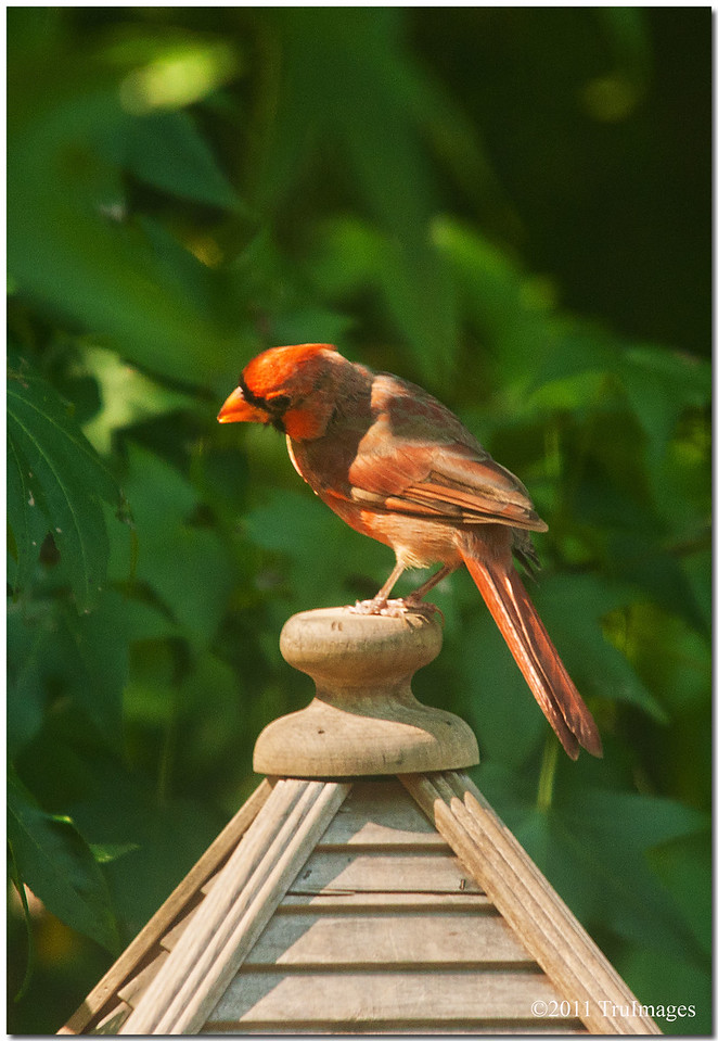 Sept 1<br /> King of the birdfeeder!