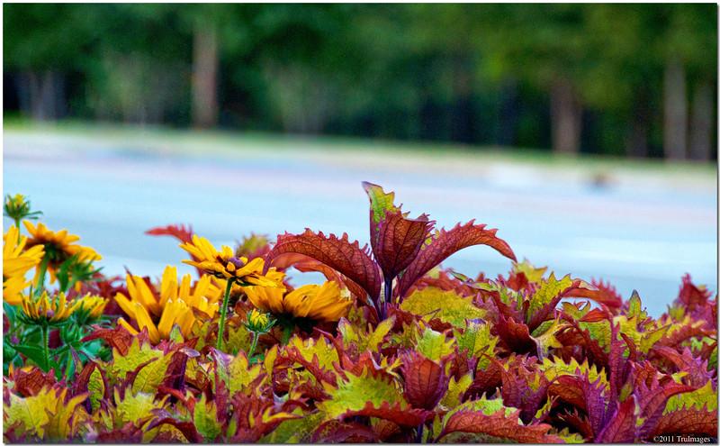 Jun 24<br /> Colorful arrangement