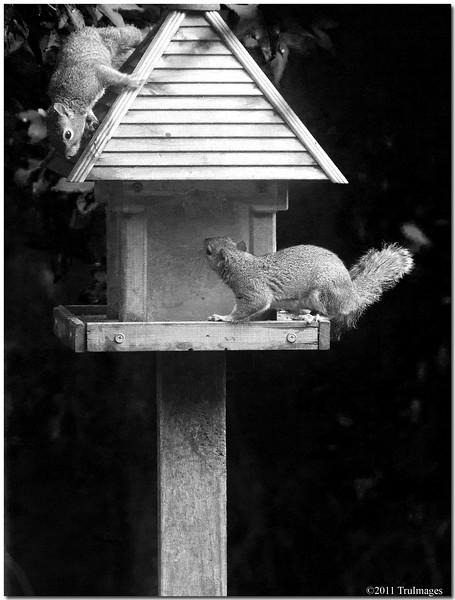 May 28<br /> Squirrel follies