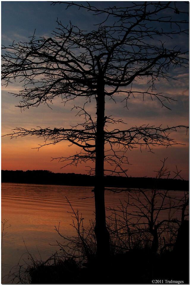 Feb 26<br /> Silhouette