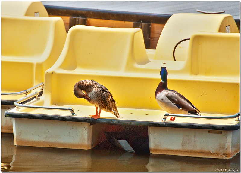 """May 22<br /> """"Where is the Captain??. We are still waiting for our boat ride!"""""""