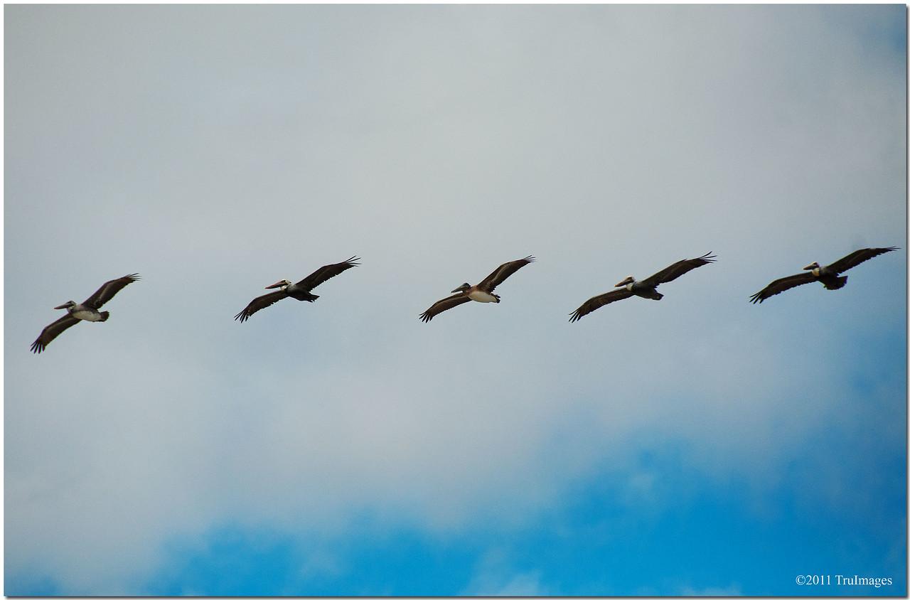 Nov 27<br /> Perfect formation!