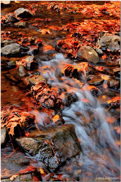 Oct 30<br /> Fall  colors<br /> <br /> A small flowing stream provides contrast with a surrounding carpet of fall colors. Fall has finally arrived in NC!<br /> <br /> Comments from yesterdays photo much appreciated!  Will try to catch up on my comments later today!