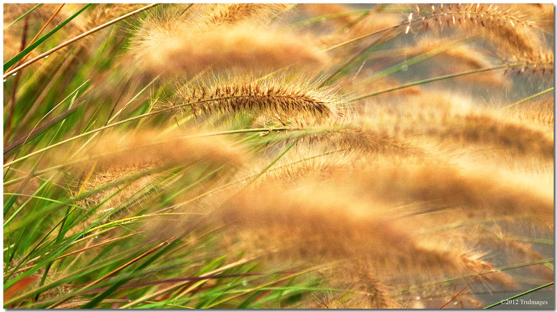 Oct 3 <br /> <br /> Cattails cattails everywhere!<br /> <br /> Thanks for the wonderful comments on yesterdays photo!!