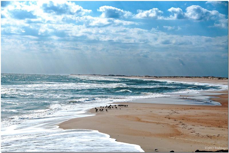 Jan 28<br /> North Carolina Outer Banks