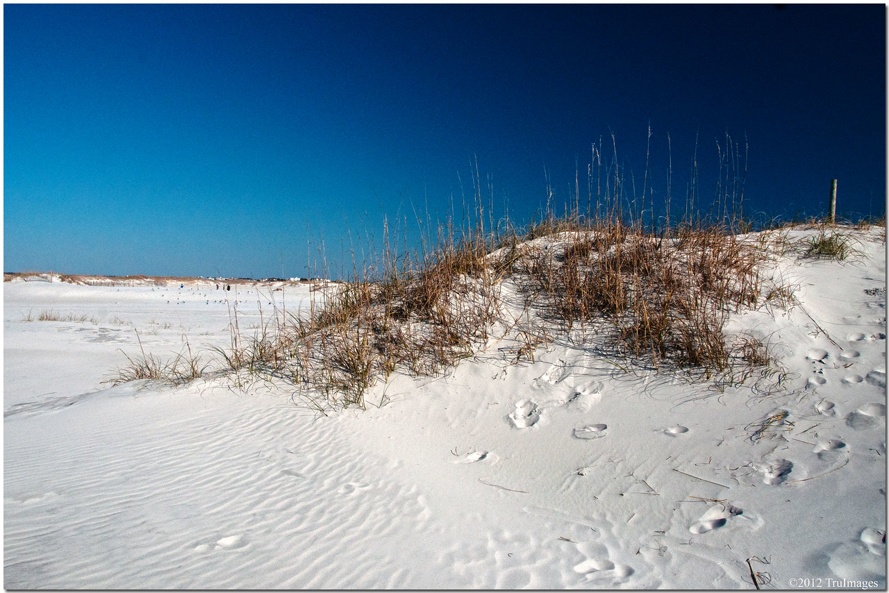 Jan 18<br /> Sand dunes, keepers of the beach.