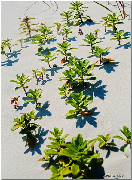 Jan 26<br /> Sand foliage