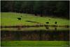 Mar 18<br /> Farmlands of Nc