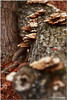 Mar 19<br /> Tree mushrooms