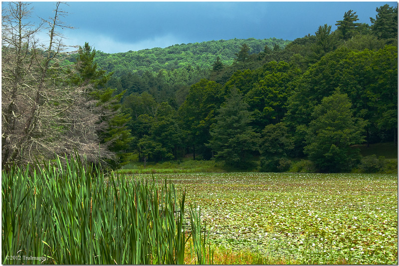 Jul 24<br /> the hidden lake<br /> <br /> This lake was filled with lilypads and flowers. The sun peaked from behind the clouds provide the rich green colors. I was in heaven!