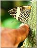 Jul 17<br /> Butterfly kiss