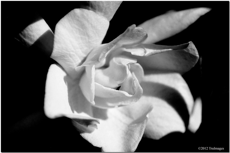 Sept 3 <br /> <br /> a gardenia<br /> <br /> Out enjoying the labor day holiday. Hope everyone had a wonderful holiday as well.