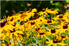 Jul 13<br /> Flowers + bees= honey