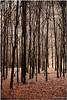 Jan 8<br /> The dark forest