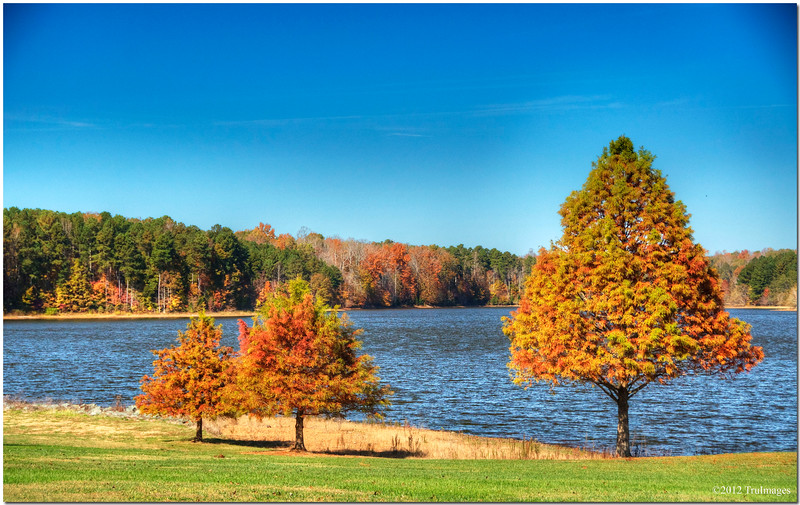 """Nov 6<br /> A Trio of Trees<br /> <br /> Fall color surrounds a small lake.<br /> <br /> Thanks for all the wonderful comments on my """"Think Pink"""" photo yesterday!"""
