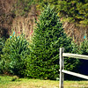 Dec 4 Pick me, Pick me!!  Its that time again! Christmas trees are waiting to bring holiday cheer to your home!