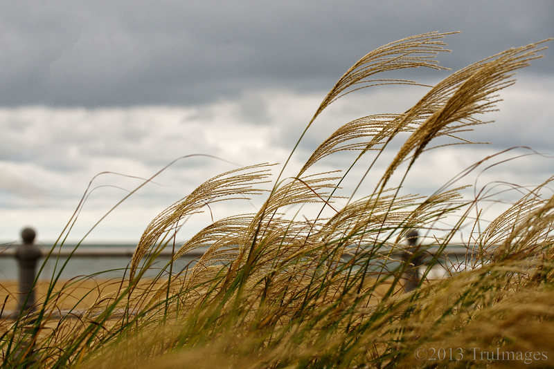 Oct 2<br /> Windy<br /> <br /> Some ornamental grasses near the beach bend defiantly in the blowing wind!<br /> <br /> Thanks for dropping by and commenting!