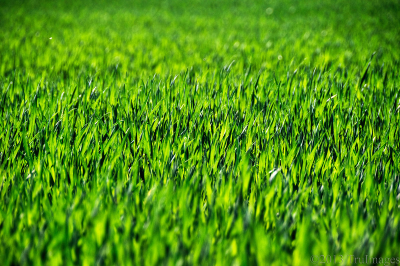 April 15<br /> Simply green<br /> <br /> Backlit grass from a meadow represent spring nicely!<br /> <br /> Happy Monday everyone!