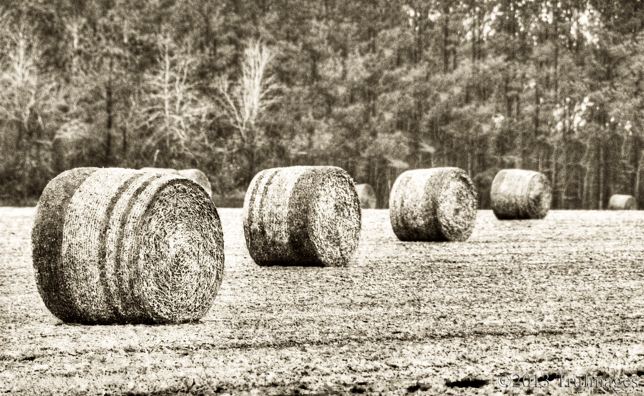 Apr 8<br /> farmlands<br /> <br /> Hay bails perfectly aligned.<br /> <br /> Thanks for commenting. I am sick with a cold so wasn't able to comment much yesterday as I spent the day in bed. Still sick but feel a little better so hopefully I will catch up with everyone soon! Happy Monday!