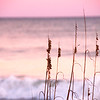 Mar 30<br /> Reeds<br /> <br /> As we were leaving the beach,  I looked back over my shoulder and saw these winter reeds with the pastel colors of the setting sun as their backdrop. <br /> <br /> Thanks for stopping by and commenting!!
