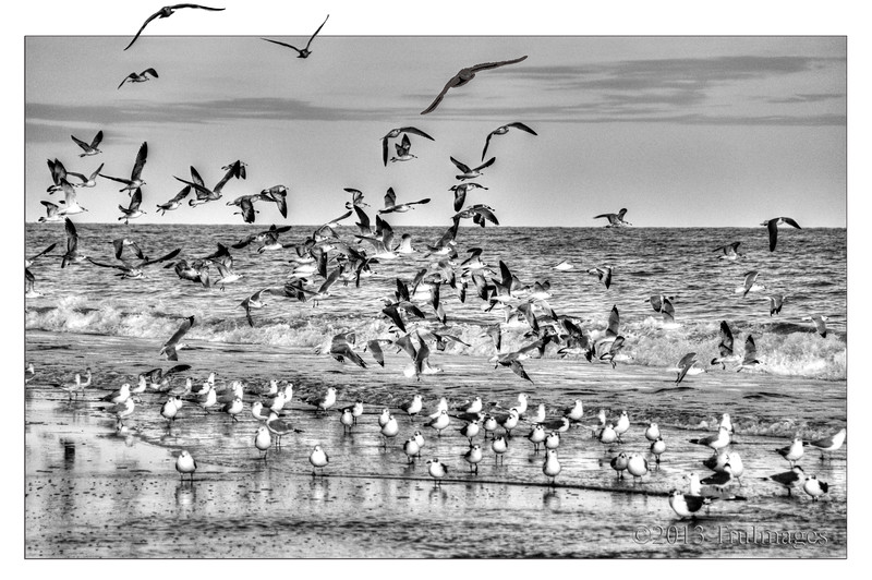 Feb 28<br /> Air and land<br /> <br /> Seagulls all over! In the air, land and ocean!<br /> <br /> Thanks for commenting!!