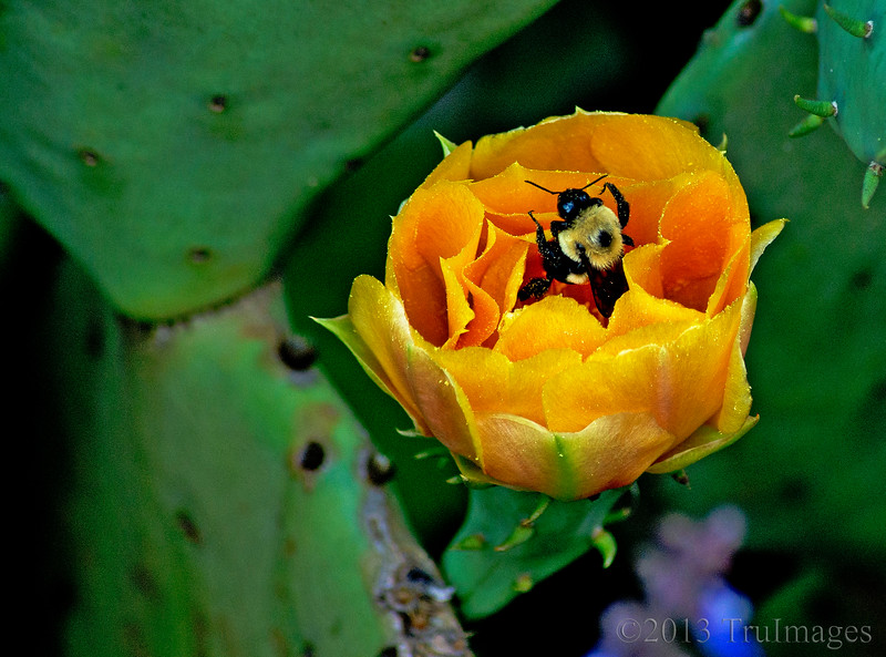 Jun 21<br /> Bee in your bonnet!<br /> <br /> A fitting image for the first day of summer, a busy bee hard at work!<br /> <br /> Happy Friday everyone!