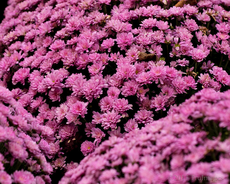 Nov 11<br /> Pink patterns<br /> <br /> In sharp contrast to yesterday's alien b&w shot, we have something a little more familiar and colorful for today!