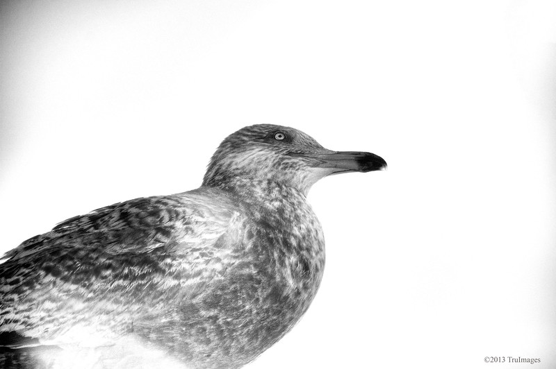 Feb 11<br /> Seagull thoughts<br /> <br /> More from our beach trip at the beginning of Feb. I love photographing seagulls maybe because sometimes they allow you to get close for good shots!!<br /> <br /> Thanks for the huge response to yesterdays photo! Interestingly enough, I almost did not post the photo because it was such a departure from my usual work!!